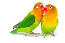 bird-cut