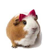 hamster-cut