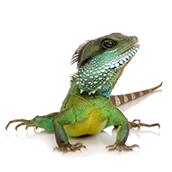 reptile-cut