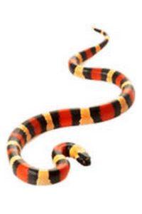 Le Milk Snake