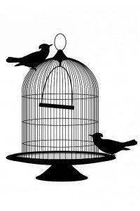 Le logement des oiseaux
